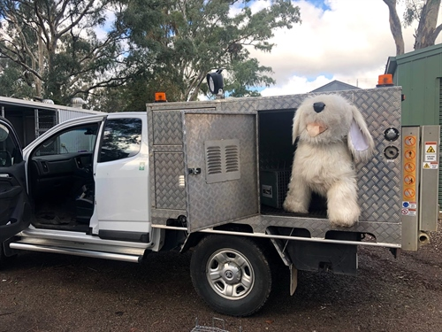 Compliance van used to reunite stray pets